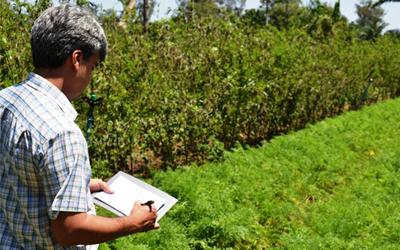 Criado o Conselho Federal dos Técnicos Agrícolas